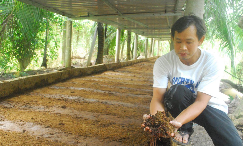 Mô hình nuôi trùn quế bằng phân bò mang lại hiệu quả cao